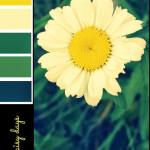 Daisy Days Colour Palette