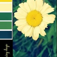 Daisy Days Colour Palette