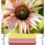 Hot Summer Days Colour Palette