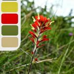 Red Flower Colour Palette