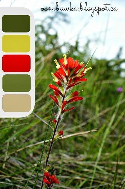 oombawka design colour palette red flower