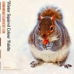 Winter Squirrel Colour Palette