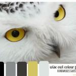 Wise Owl Colour Palette