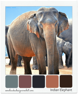 Indian Elephant Color Palette