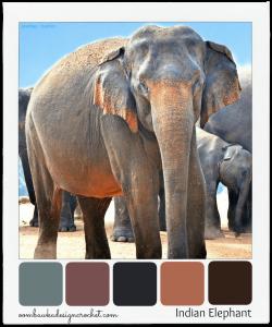 Color Palette. Indian Elephant Colour Palette. Oombawka Design.