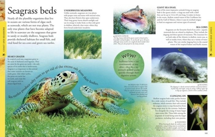 Seagrass Beds | Oceans | book reviews