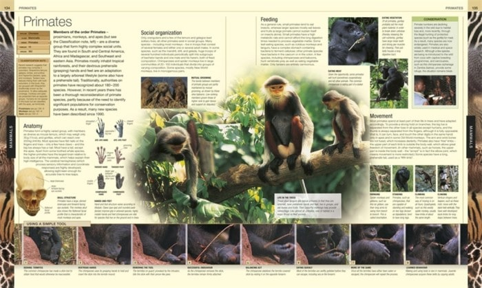 Mammals Primates | Animal The Definitive Visual Guide | Book Review