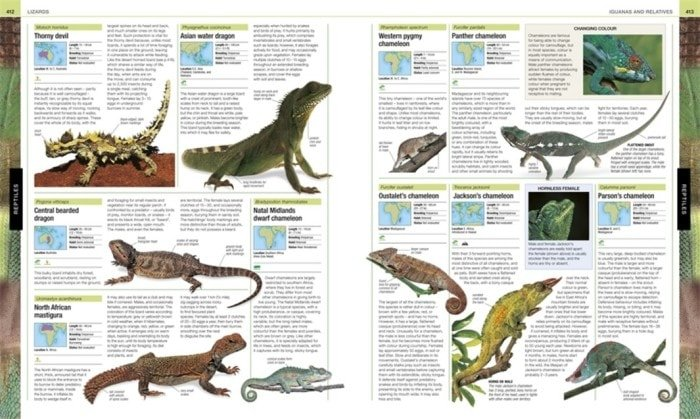 Reptiles | Lizards | Animal The Definitive Visual Guide | Book Review