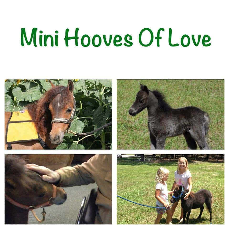 Mini Hooves of Love Organization