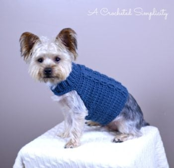 A Crocheted Simplicity Free Crocheted Cabled Dog Sweater Charity Crochet Pattern