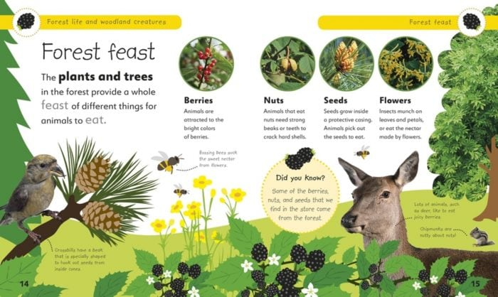 Forest Feast - Forest Life and Woodland Creatures- DK Book Review