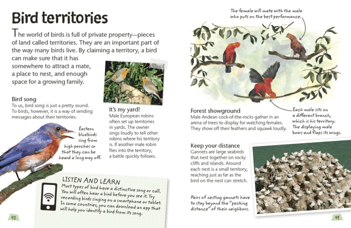 Bird Territories - Birds - DK Book Review