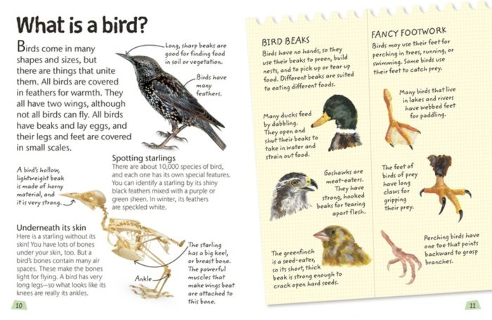 What is a Bird? - Birds - DK Book Review