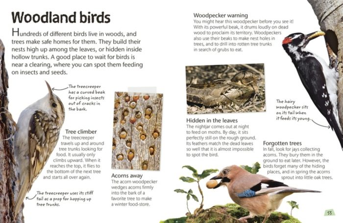 Woodland Birds - Birds - DK Book Review