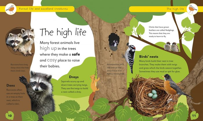 The High Life - Forest Life and Woodland Creatures- DK Book Review