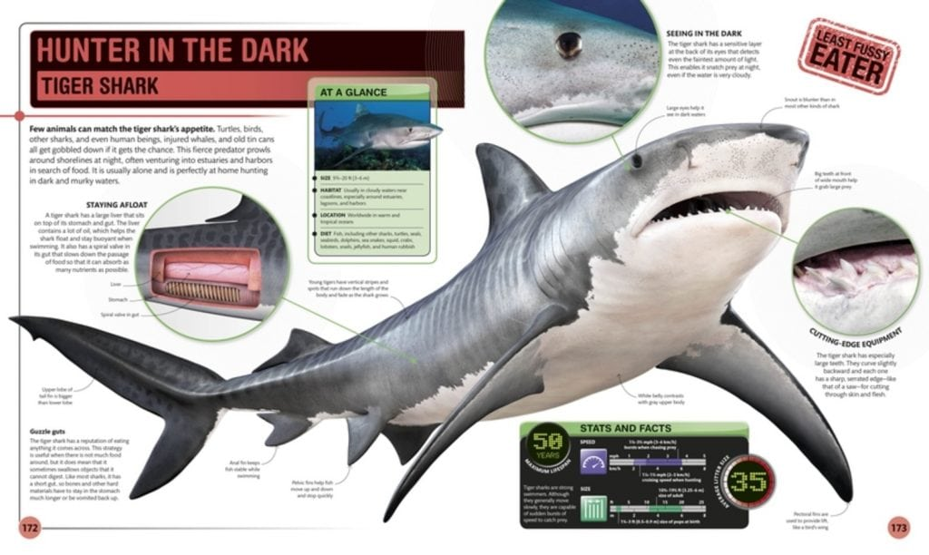 Hunter in the Dark - Super Shark Encyclopedia - DK Canada - Review by Oombawka Design