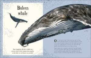 Baleen Whale - An Anthology of Intriguing Animals - DK Canada - book review by Rhondda Mol Oombawka Design