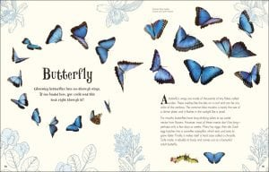 Butterfly An Anthology of Intriguing Animals - DK Canada - book review by Rhondda Mol Oombawka Design
