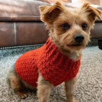 Dandy Dog Sweater - Free Pattern Friday