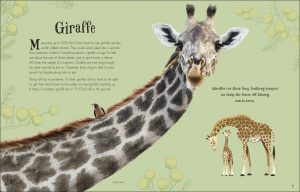 Giraffe An Anthology of Intriguing Animals - DK Canada - book review by Rhondda Mol Oombawka Design