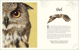 Owl - An Anthology of Intriguing Animals - DK Canada - book review by Rhondda Mol Oombawka Design