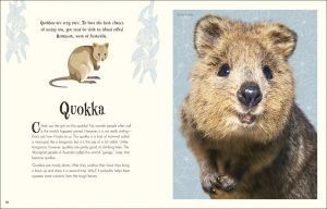 Quokka An Anthology of Intriguing Animals - DK Canada - book review by Rhondda Mol Oombawka Design