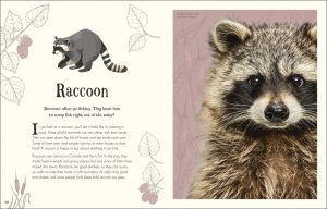 Raccoon An Anthology of Intriguing Animals - DK Canada - book review by Rhondda Mol Oombawka Design