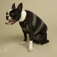Striped-Dog-Sweater-Pattern-Crochet-–-Lion-Brand-Yarn