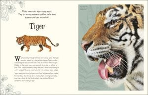 Tiger - An Anthology of Intriguing Animals - DK Canada - book review by Rhondda Mol Oombawka Design