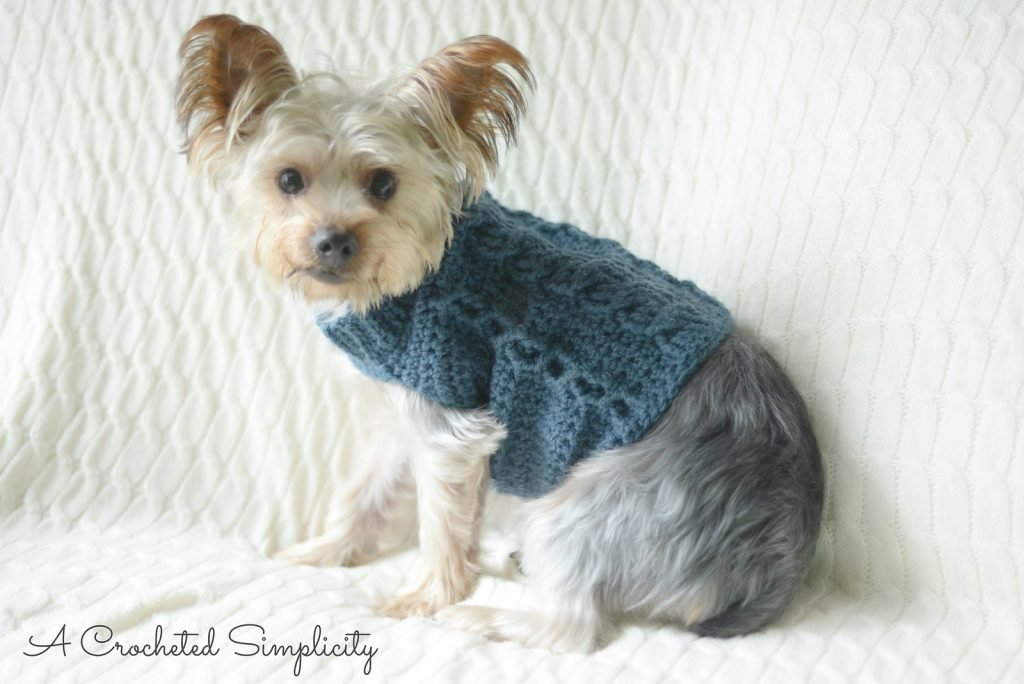 Wilson Cabled Dog Sweater - Free Pattern Friday