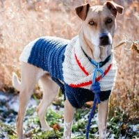 easy-crochet-dog-sweater- - Free Pattern Friday