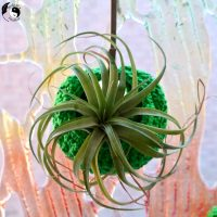 Link Party 395 - Air Plant Pods - Crocheted
