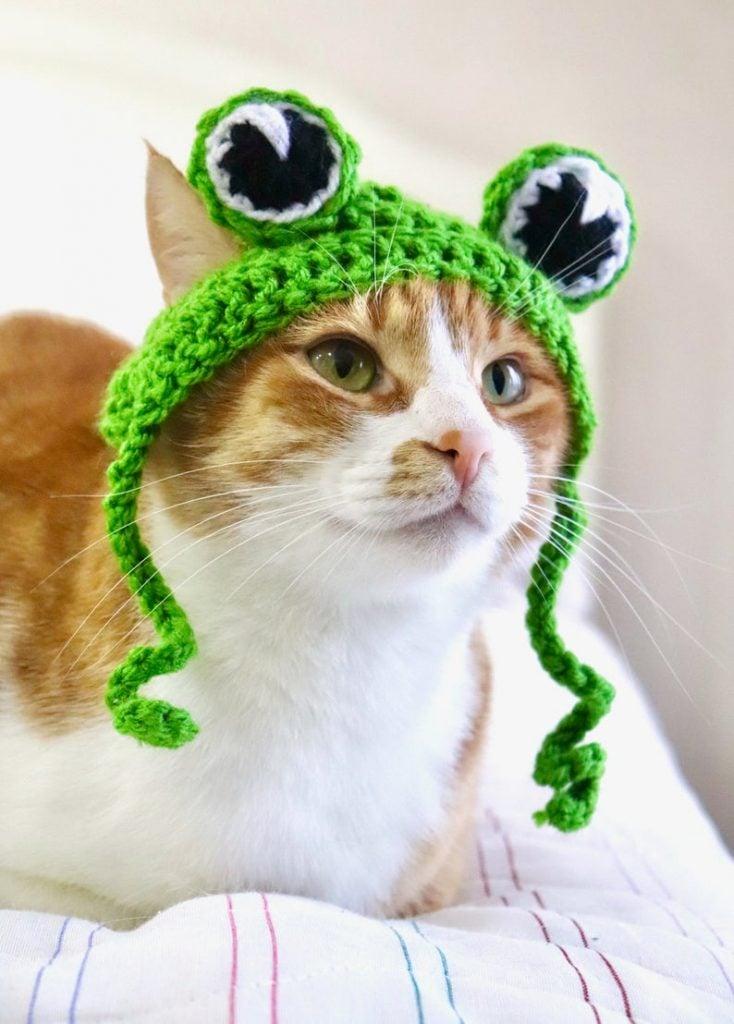 Frog Cat Hat Finished Item