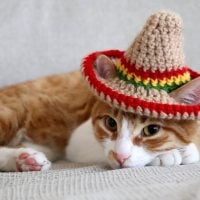 Cat Crochet Hat Pattern - Sombrero for Cats